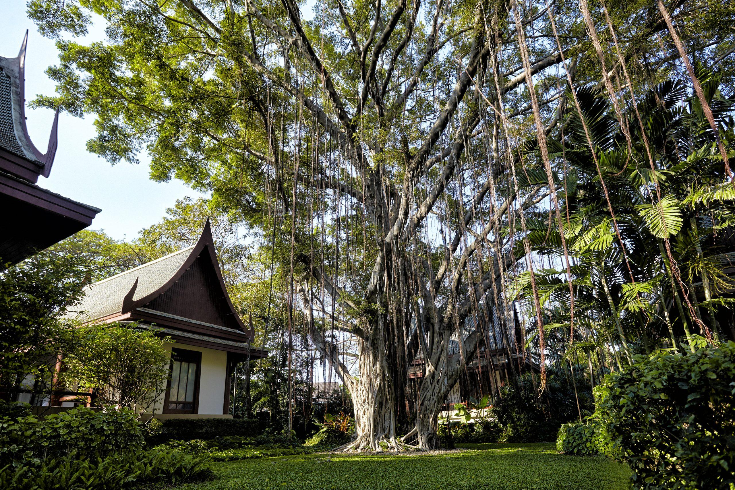Chiva-Som Banyan Tree - H